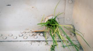 trawa zamiast korka