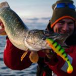 Szczupak 90cm na herringa