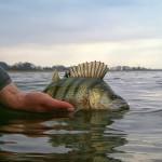 Rafał dba o swoje łowisko. Wszystkie ładne ryby wracają spowrotem do wody