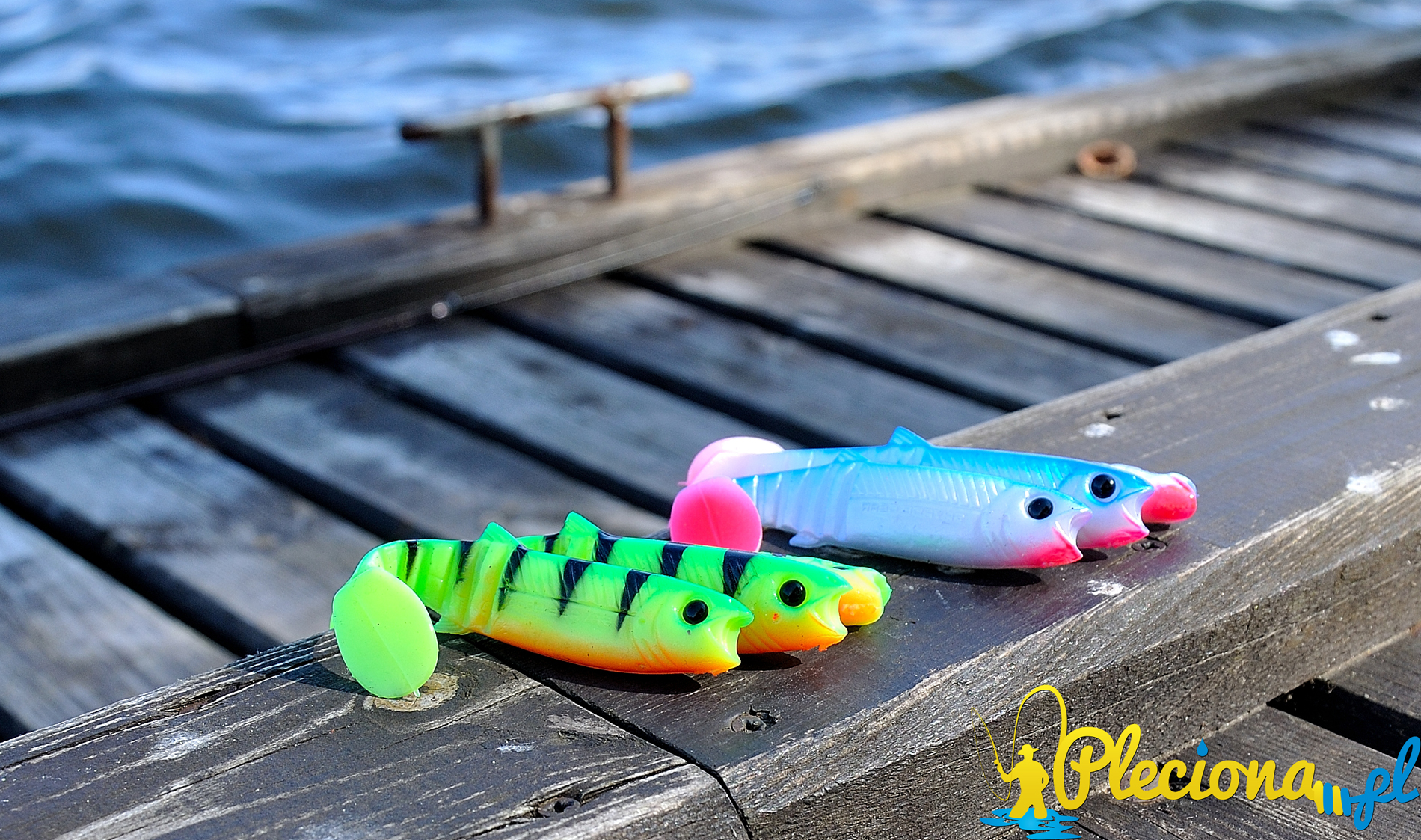 Cannibale Fire Tiger i Blue Perl