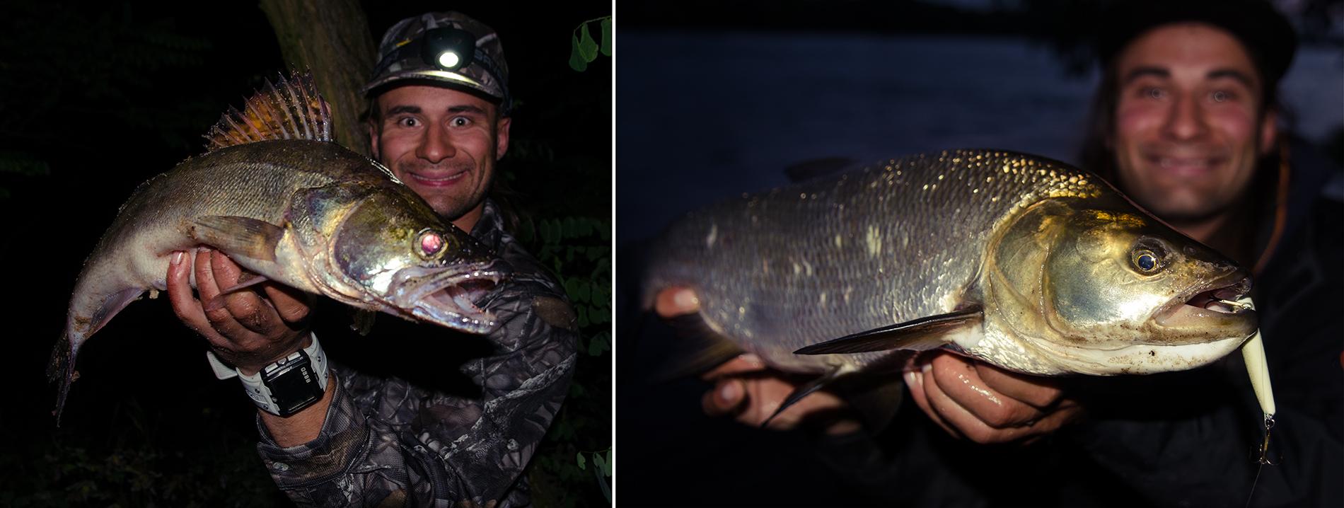 Wieczorami ryby również są aktywne.