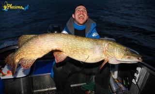 Rekordowy szczupak 130cm