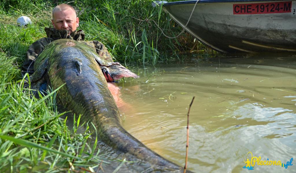 Sum 208cm z rzeki ebro