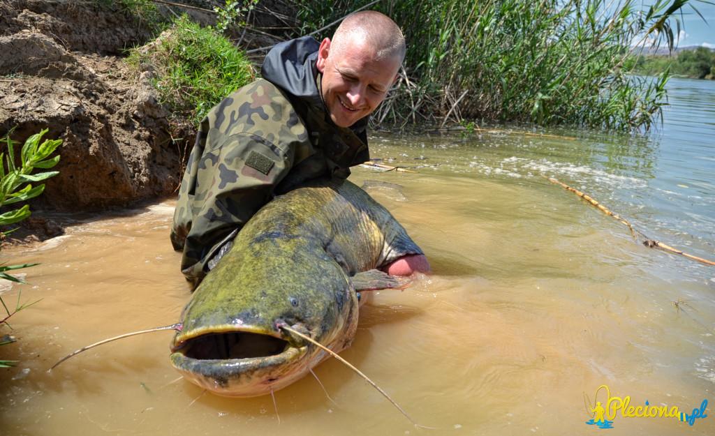 Sum 183cm złowiony na górnym odcinku rzeki Ebro